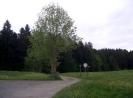 Wolfsried & Umgebung_38